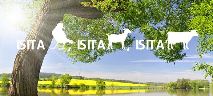Is it a bird, is it a goat, is it a bull